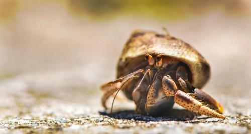 Crustacean Arthropod Invertebrate Insect Close Animal #1