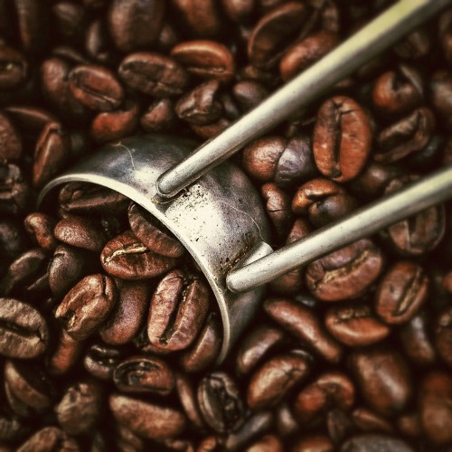 Spice Fastener Coffee Brown Beans Bean Caffeine Drink Food - Free Photo 1
