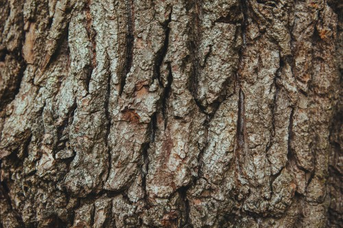 Tree Rough Texture Material Surface #1