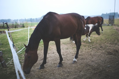 Horse Horses Farm Grass Ranch Animal Stallion - Free Photo 1