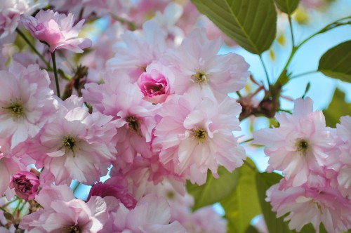 Pink Shrub Flower Spirea Plant Blossom Flowers Petal Spring #1