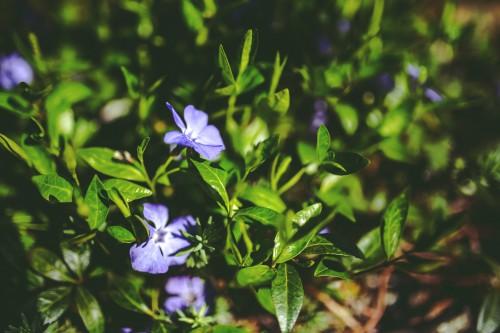 Plant Herb Flower Garden Flowers Spring #1