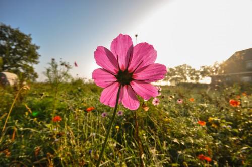 Pink Flower Plant Garden Petal Blossom Flowers Herb #1