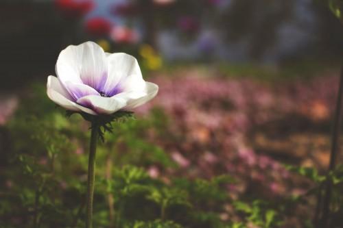 Pink Flower Petal Plant Blossom #1