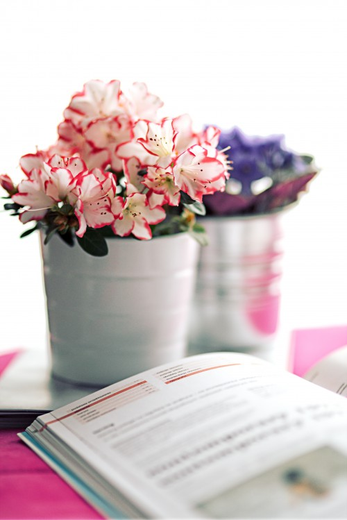 Pink Bouquet Flower Flowers Cup Arrangement Pot - Free Photo 1