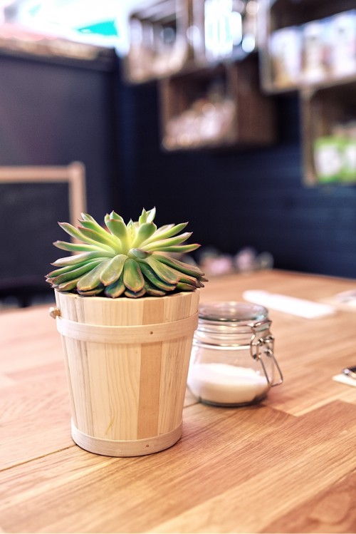 Pot Container Glass Plant Flower Fresh Cactus Drink Nobody Spice #1