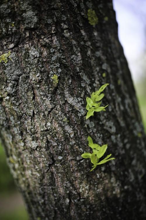 Lizard Tree Wood Bark Plant Rough Texture - Free Photo 1