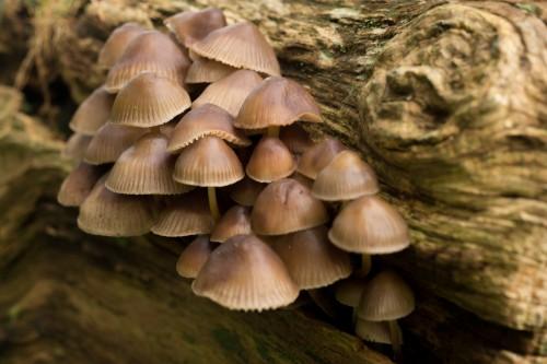Mushroom Vegetable Produce Food Fungus Shell #1
