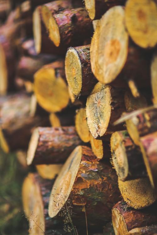 Acorn Fruit Insect Arthropod Honeycomb Food Invertebrate Close Brown Tree #1