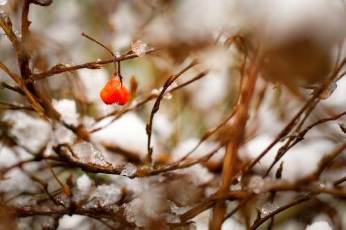 Tree Plant Branch Snow Season Winter Ice Close Cold #1
