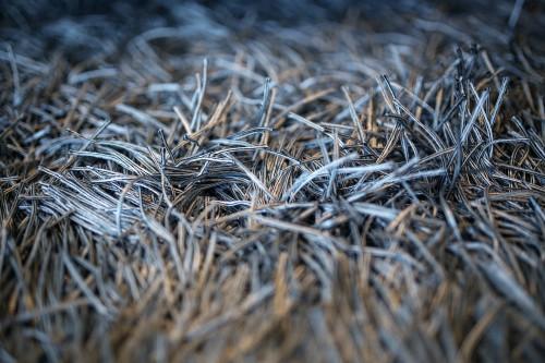 Web Plant Echinoderm Wheat Cobweb #1