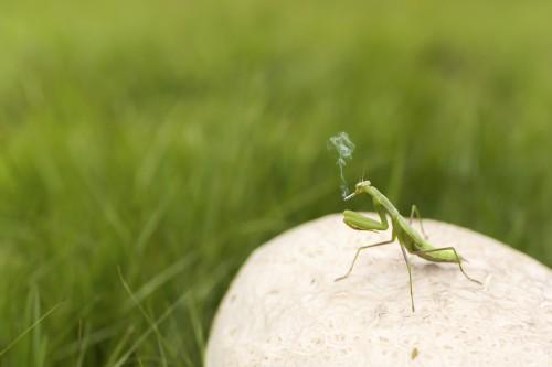Cricket Insect Grasshopper Arthropod Invertebrate Wildlife #1