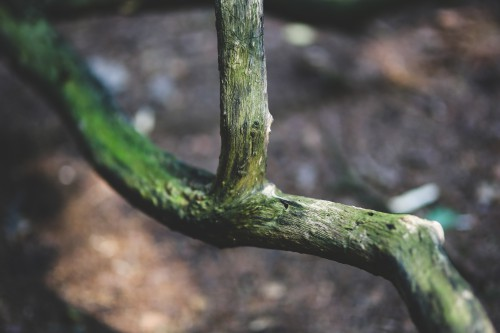 Snake Reptile Tree Plant Close Mamba Closeup Wildlife Forest #1