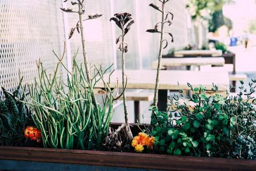 Windowsill Sill Pot Garden Flowers Plant #1