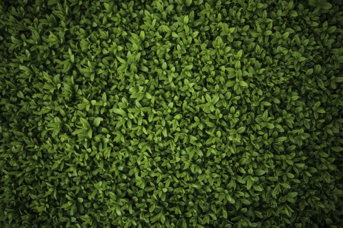 Greenery Texture Pattern Plant Grass Lawn Backdrop Spring Growth #1