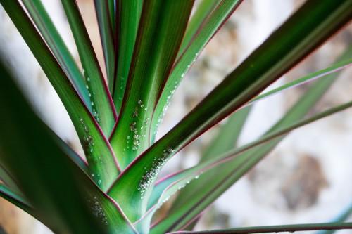 Herb Plant Mint Leaf Fresh Garden - Free Photo 1
