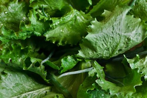 Vegetable Lettuce Herb Produce Plant Fresh Mustard Leaf #1