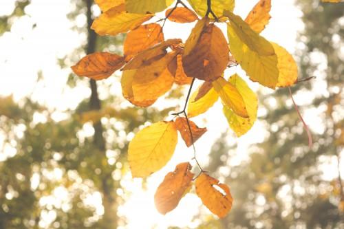 Tree Plant Branch Leaf Sky Season Spring Shrub Forest #1