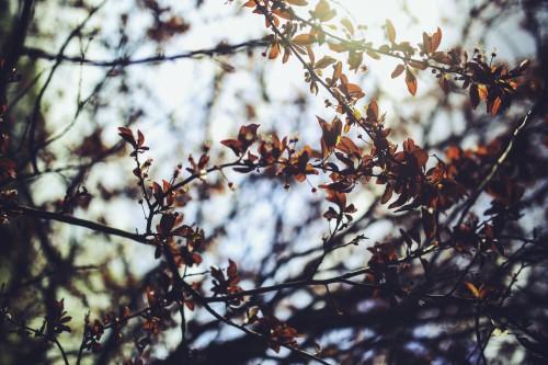 Tree Almond Branch Season Sky Snow Shrub Winter #1