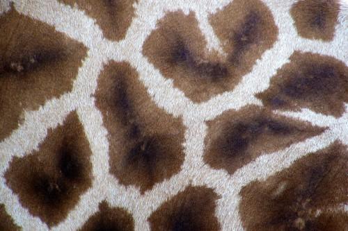 Honeycomb Framework Structure Texture Pattern Design Backdrop - Free Photo 1