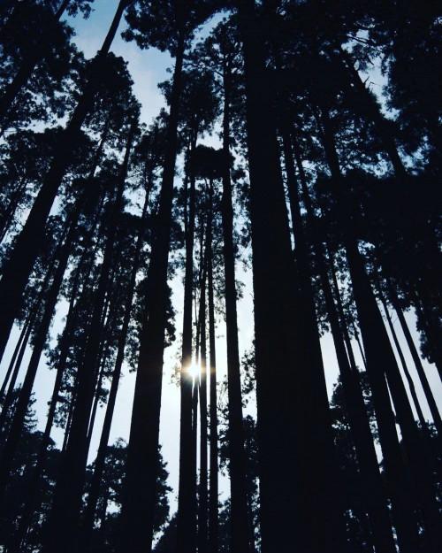 Tree Poplar Forest Trees Landscape Wood Season #1