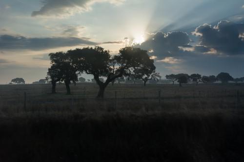 Sky Tree Atmosphere Snag Landscape Sun Forest #1