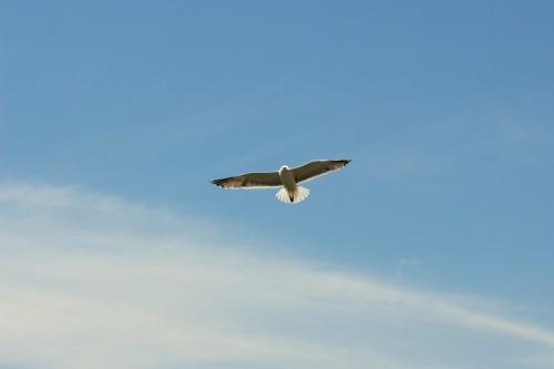 Hawk Bird Sky Falcon Jet Flight Kite Airplane Flying #1