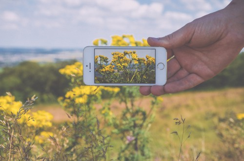 Rapeseed Oilseed Seed Fruit Field Landscape Mustard Tree Grass #1