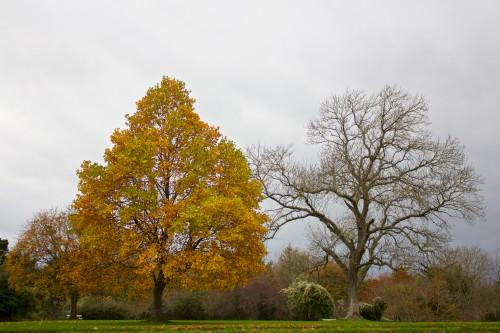 Tree Autumn Poplar Landscape Park Plant #1