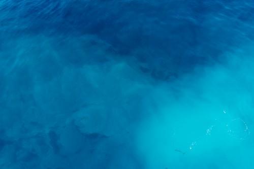 Ocean Sea Water Ray Fish Stingray Shark Underwater Reef Marine - Free Photo 1