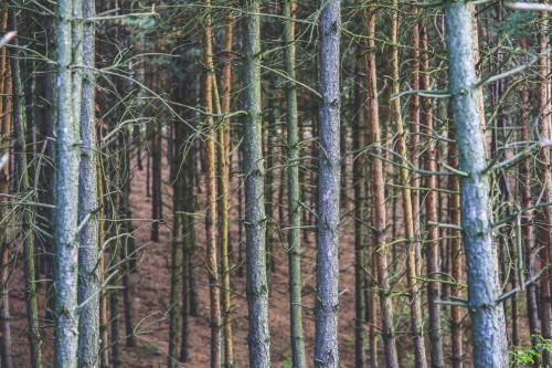 Tree Birch Forest Fence Poplar Net Landscape Barrier Trees Plant #1