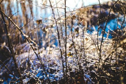 Tree Branch Snow Winter Sky Season Plant Forest #1