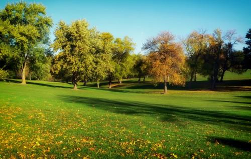 Tree Rapeseed Landscape Grass Oilseed Field Sky Meadow Countryside Seed - Free Photo 1
