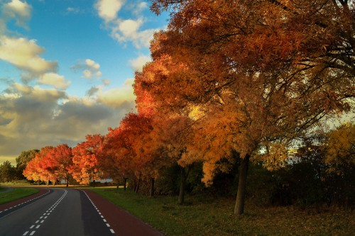 Tree Autumn Fall Acacia Landscape Park Forest Yellow Season Leaves #1