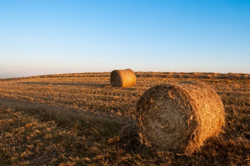 Field Hay Sky Landscape Agriculture Farm Rural Fence - Free Photo 1