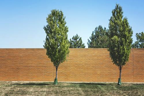 Tree Landscape Plant Park Sky