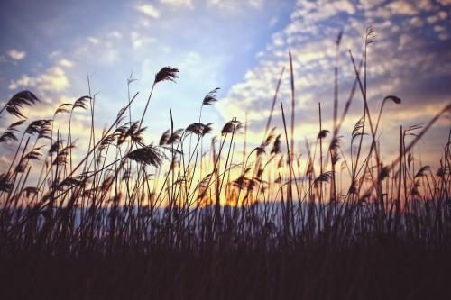 Stork Sky Landscape Grass Field Bird - Free Photo 1