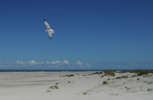 Beach Sky Sand Ocean Sea Water Coast Bird Shoreline Gull #1