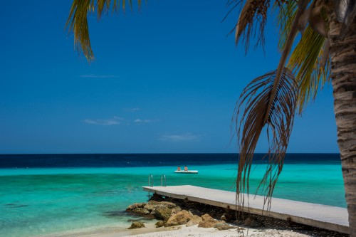 Beach Palm Ocean Sand Sea Tropical Island #1