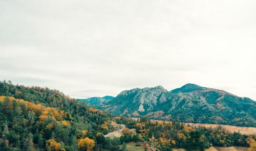 Shrub Gorse Landscape Mountain Plant - Free Photo 1