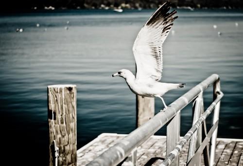 Gull Seabird Bird Sea Water Feather Wildlife Ocean Seagull #1