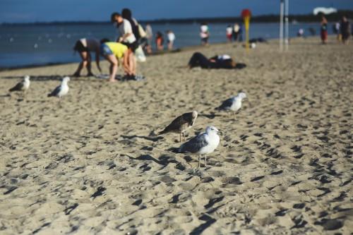 Beach Sand Sea Ocean Water Vacation Summer Outdoors Coast Shore #1