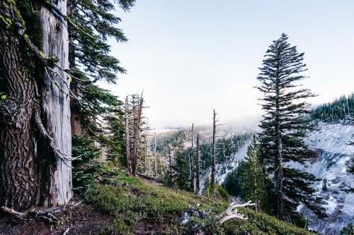 Tree Forest Bridge Structure Landscape #1