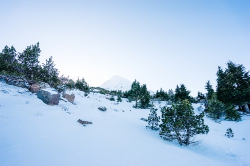 Snow Fir Winter Mountain Tree Slope #1
